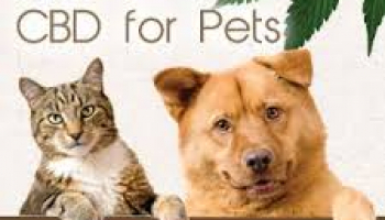 30% off Holistapet CBD for Pets coupon – Anniversary Sale